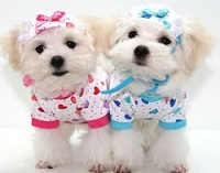 small-dog-clothes